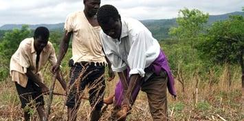 malawi farmers